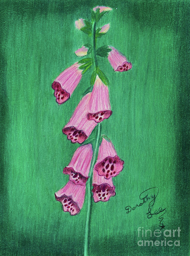Foxgloves by Dorothy Lee