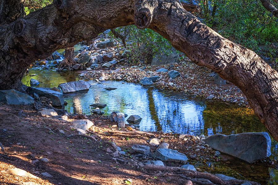 Framed By Oak by Joseph S Giacalone