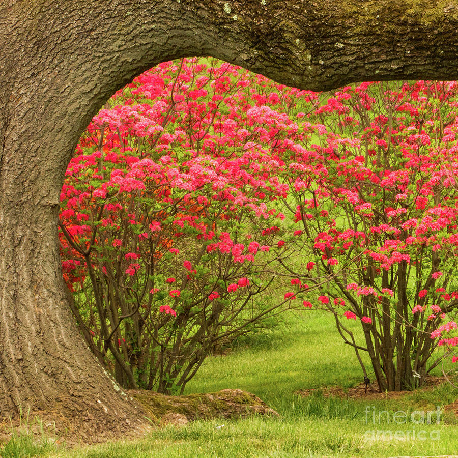 Gardens Photograph - Framing Spring by Marilyn Cornwell
