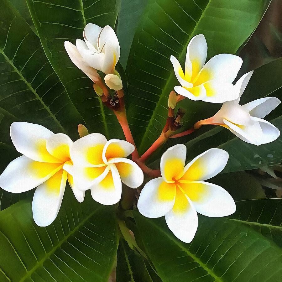 Frangipani Blossom Cluster by Taiche Acrylic Art