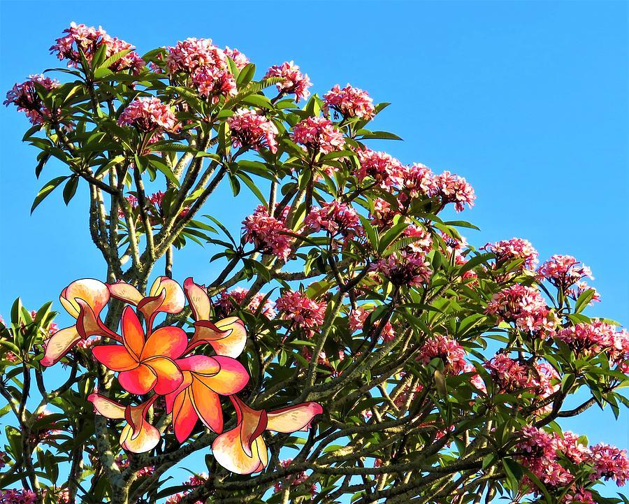 Frangipani Mixed Media - Frangipani Tree by Joan Stratton