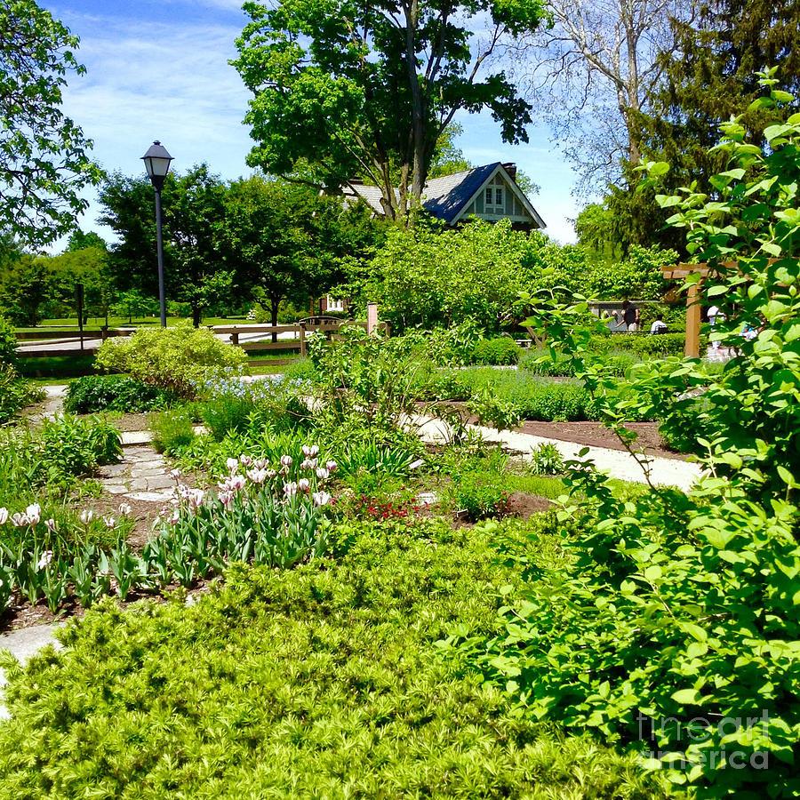 Franklin Park Community Gardens by Mindy Newman