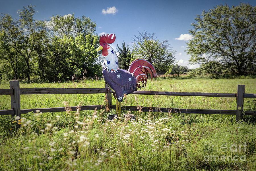 Free Range Chicken Photograph