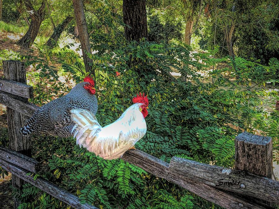 Free Range Chickens Arroyo Grande California by Floyd Snyder