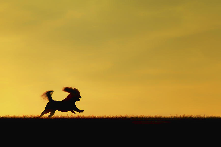 Dogs Photograph - Free To Run by Nikolyn McDonald