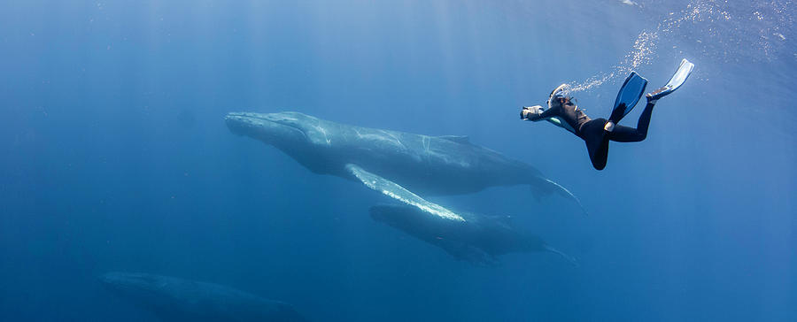 Freediving Photograph by By Wildestanimal