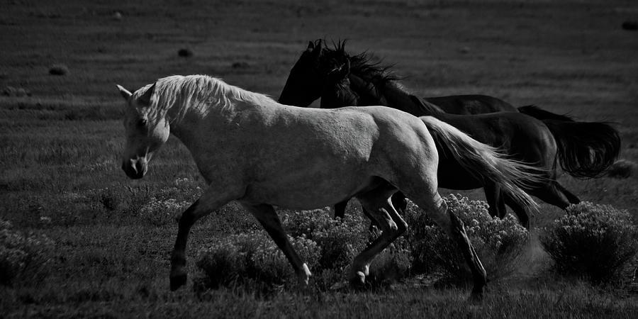 Freedom by Catherine Sobredo