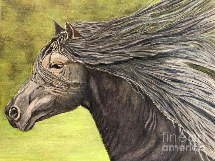 Freedom by Tina Pilgrim