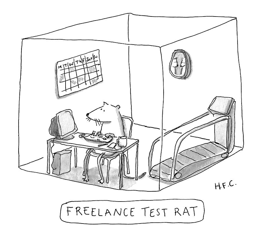 Freelance Test Rat Drawing by Hilary Fitzgerald Campbell