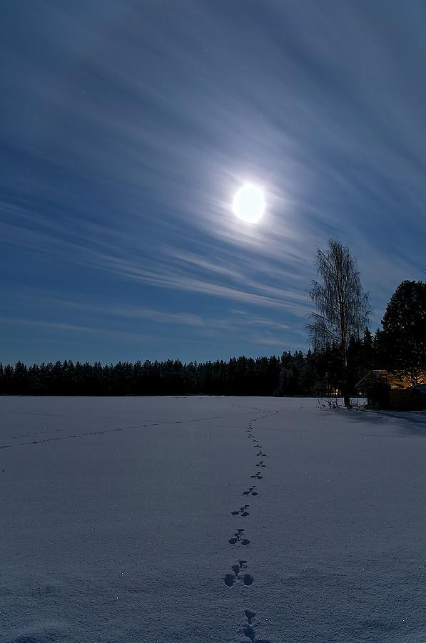 Freezing Cold Photograph by Heikki Salmi