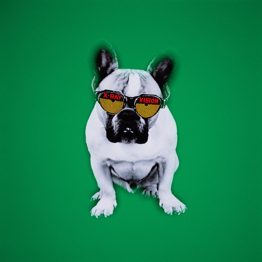 French Bulldog With X-ray Vision Glasses Photograph by David Waldorf
