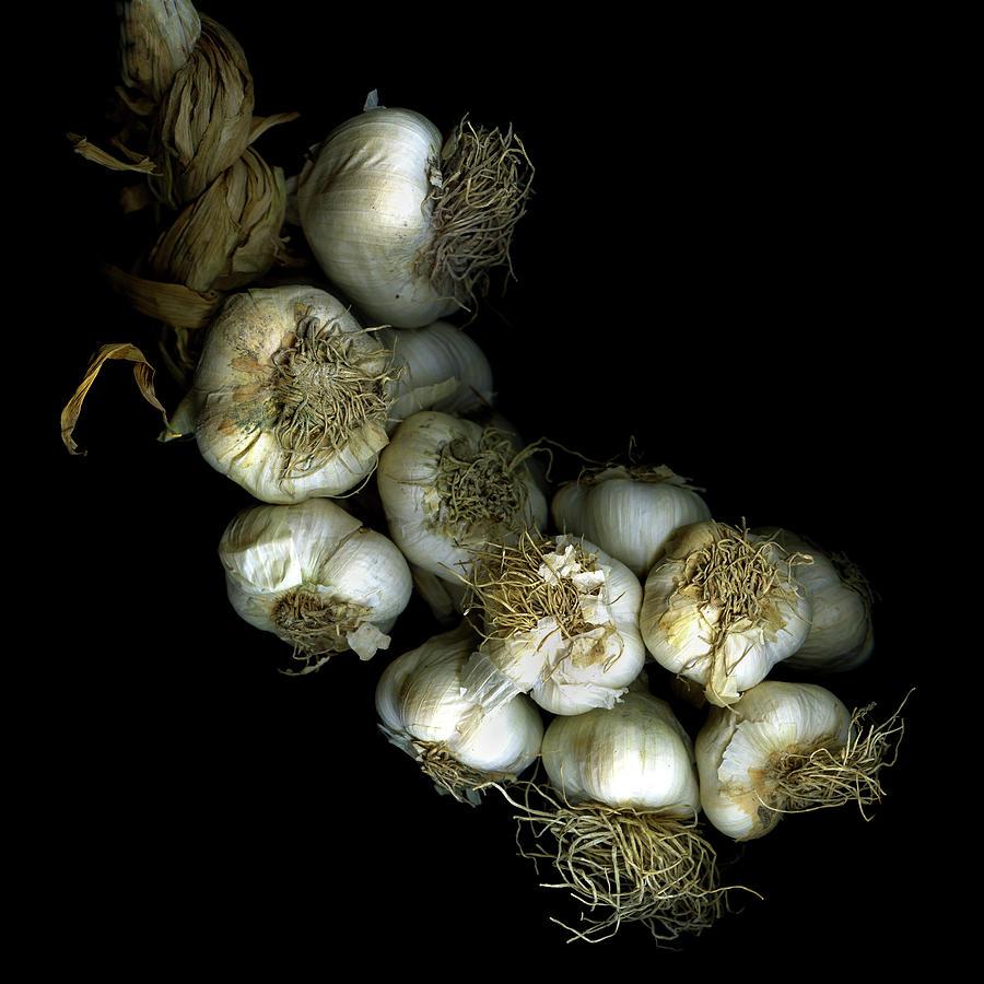 French Garlic Photograph by Photograph By Magda Indigo