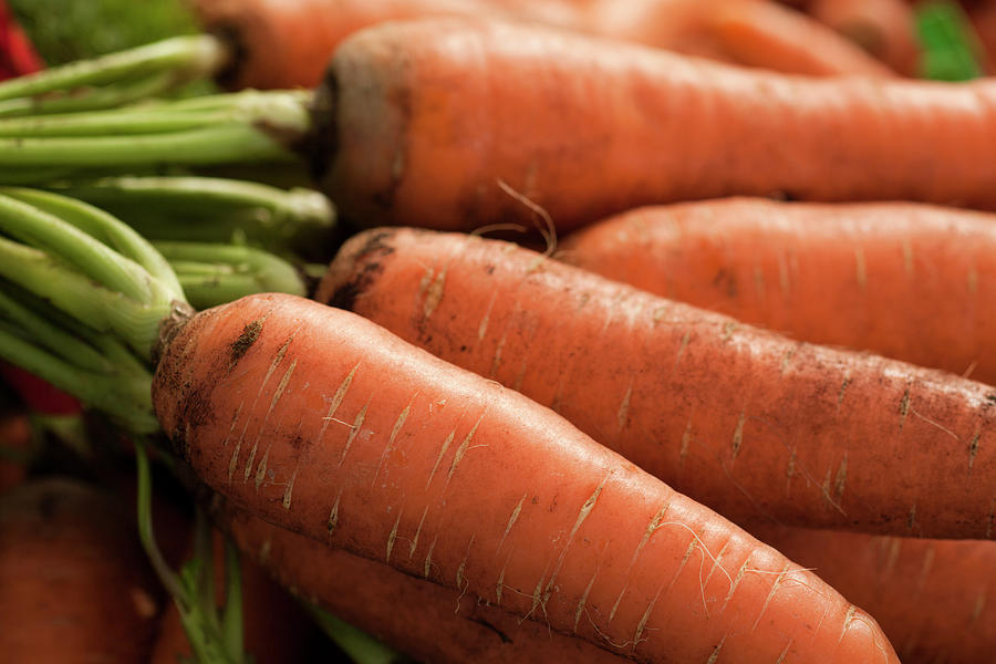 Fresh Carrots Photograph by Brian Yarvin
