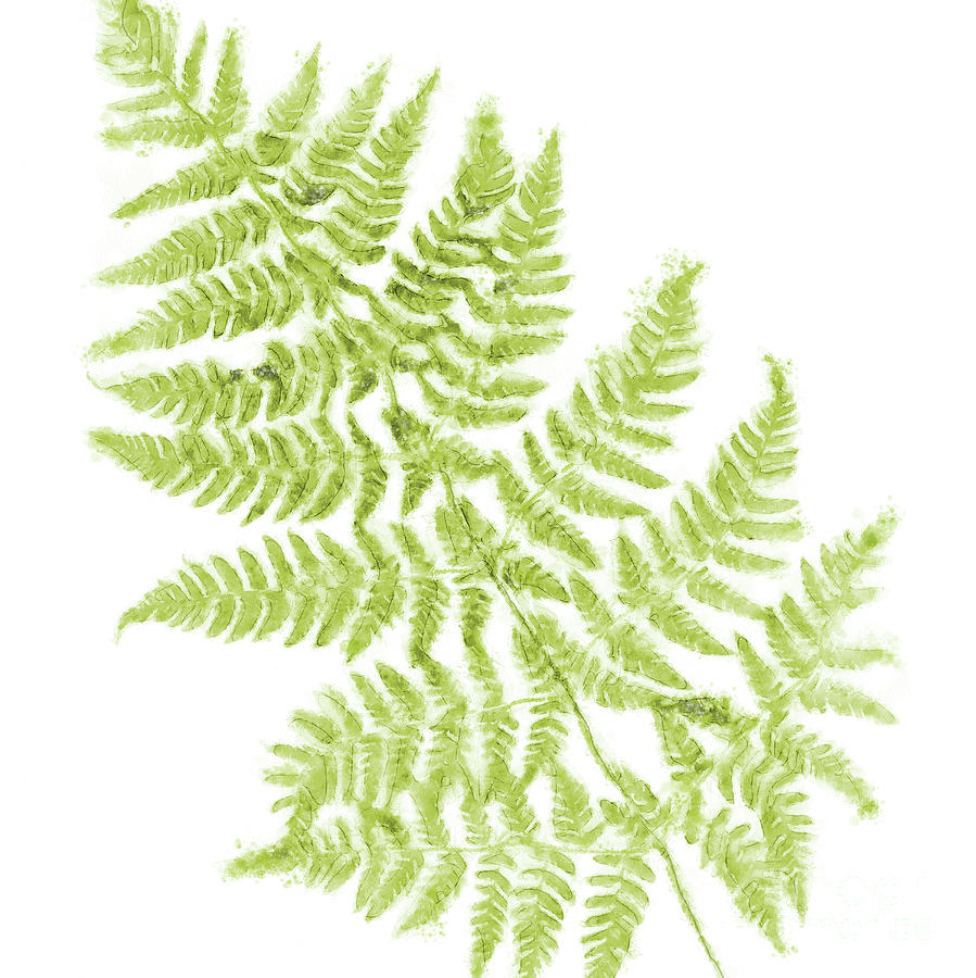 Fresh Fern Airy Modern Botanical Watercolor Painting by Tina Lavoie