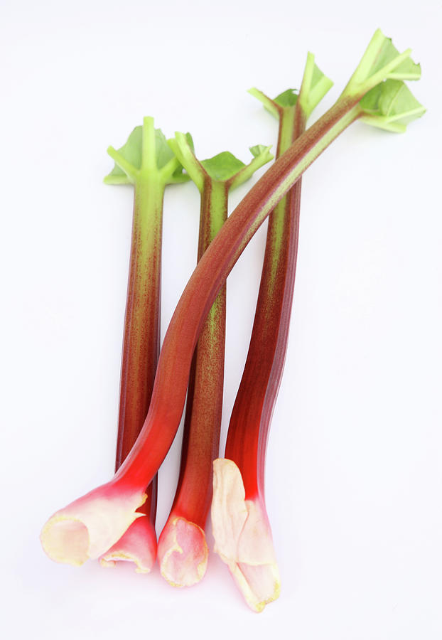 Fresh, Homegrown, Organic Rhubarb Photograph by Rosemary Calvert