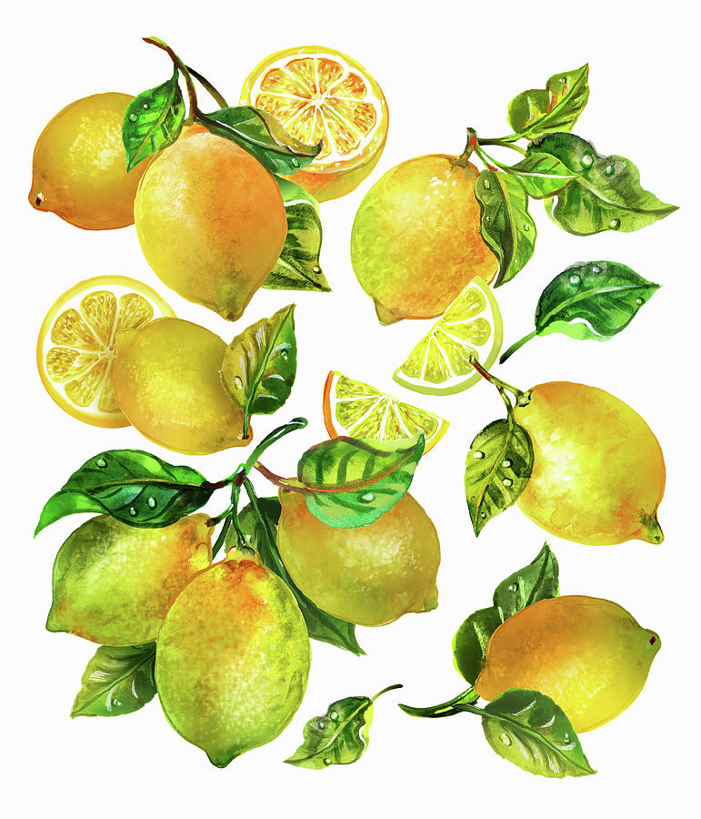 Balanced Painting - Fresh Lemons With Leaves And Stalks by Ikon Images