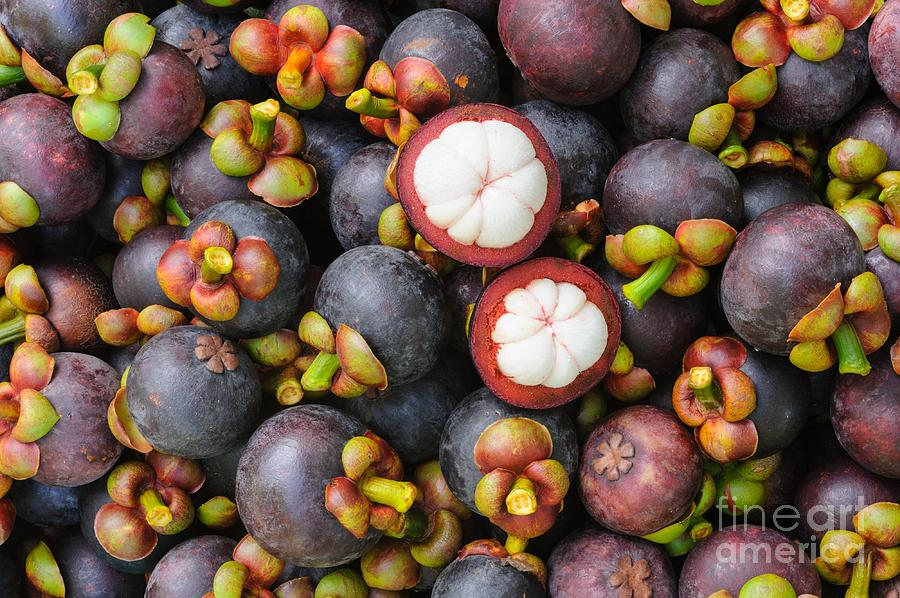 Mangosteen Photograph - Fresh Organic Mangosteen Thai Fruit In by Unchalee foto
