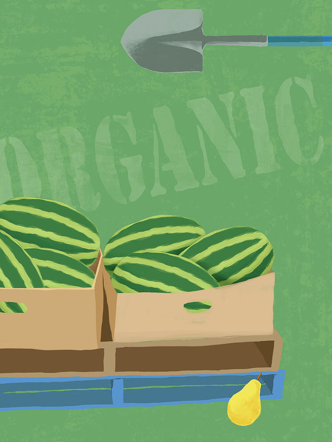 Fresh Organic Melons Illustration Digital Art by Don Bishop