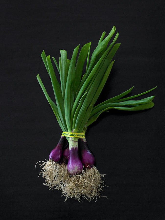 Fresh Organic Red Spring Onions Photograph by Armstrong Studios