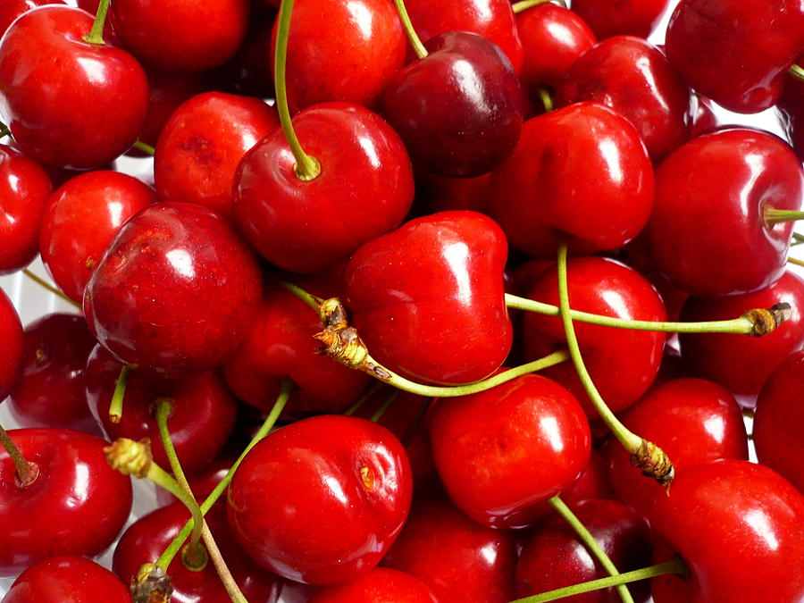 Fresh Red Cherries Photograph by Vienna Mornings