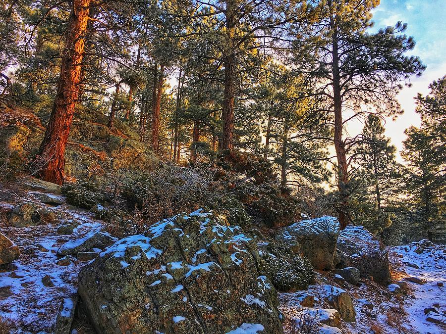 Fresh Snow on Fillius Ridge by Dan Miller
