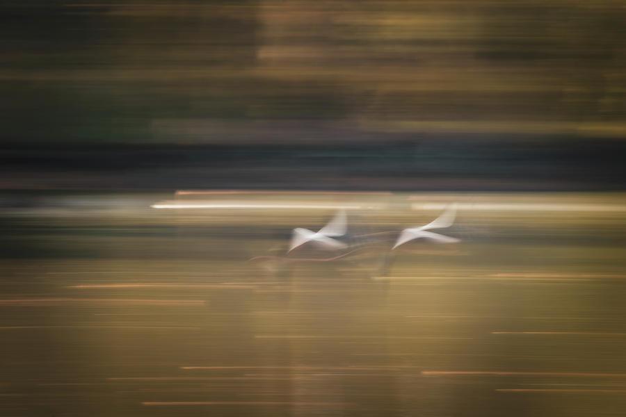 Friends by Dalibor Hanzal
