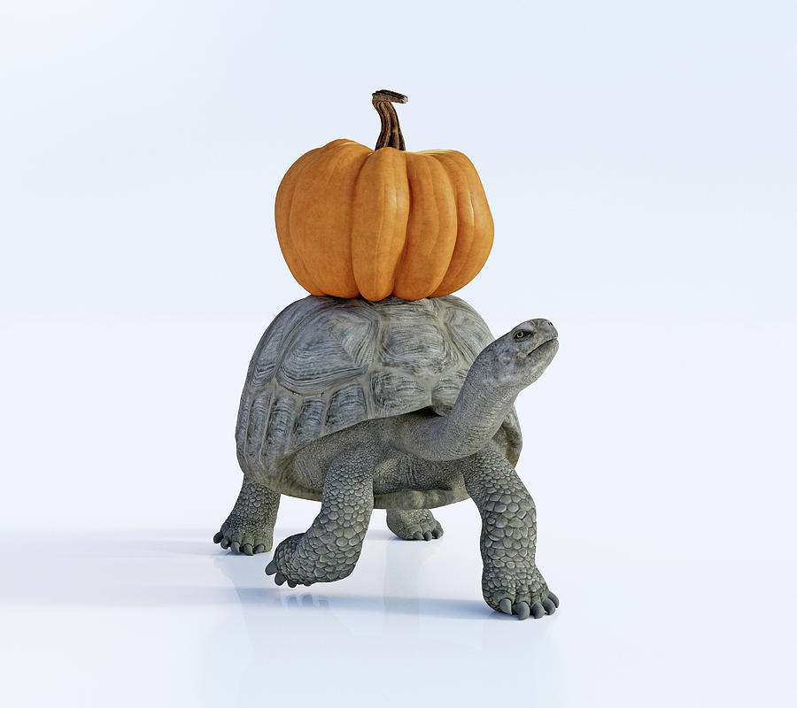 Turtle Digital Art - Friends The Tortoise And The Pumpkin by Betsy Knapp
