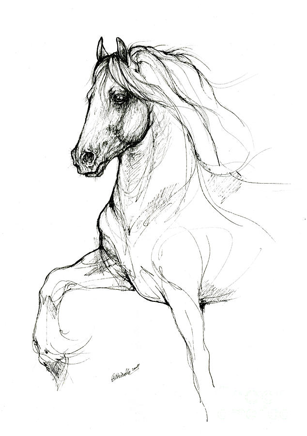 Friesian horse 2019 09 12 by Angel Ciesniarska