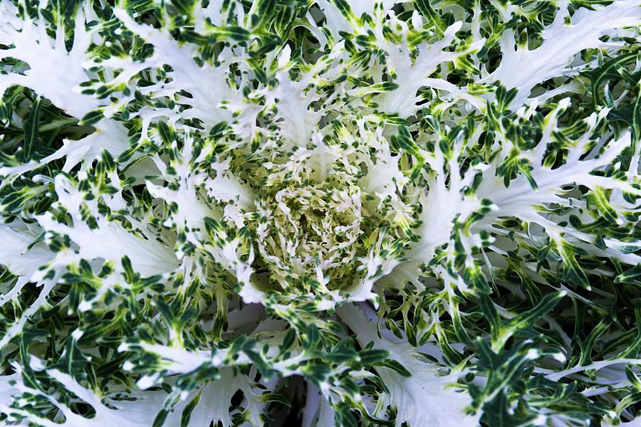 Frilly Foliage by Amy Sorvillo