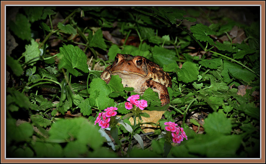 Frog And Pink Flowers by Constance Lowery