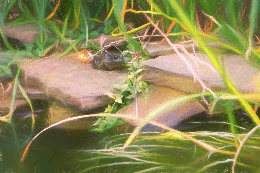 Frog by a Pond by Jason Fink