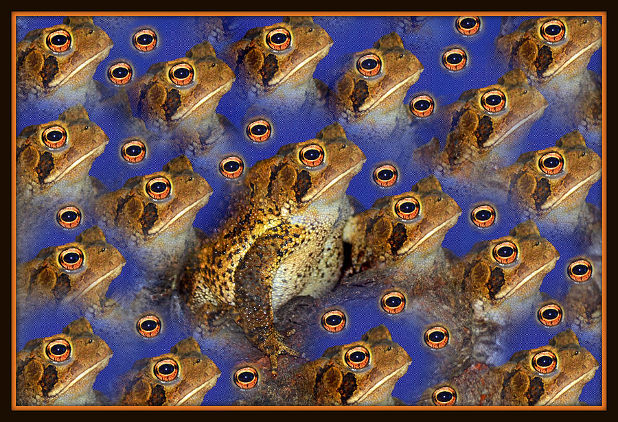 Frog Eyes For Fun by Constance Lowery