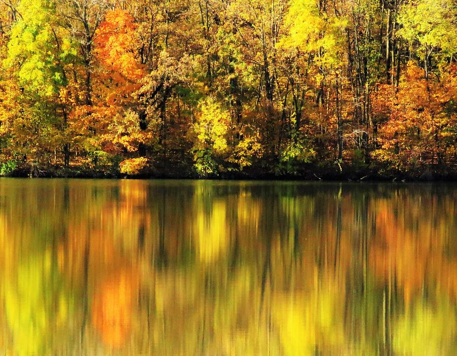 Frog Hollow Lake Reflections  by Lori Frisch