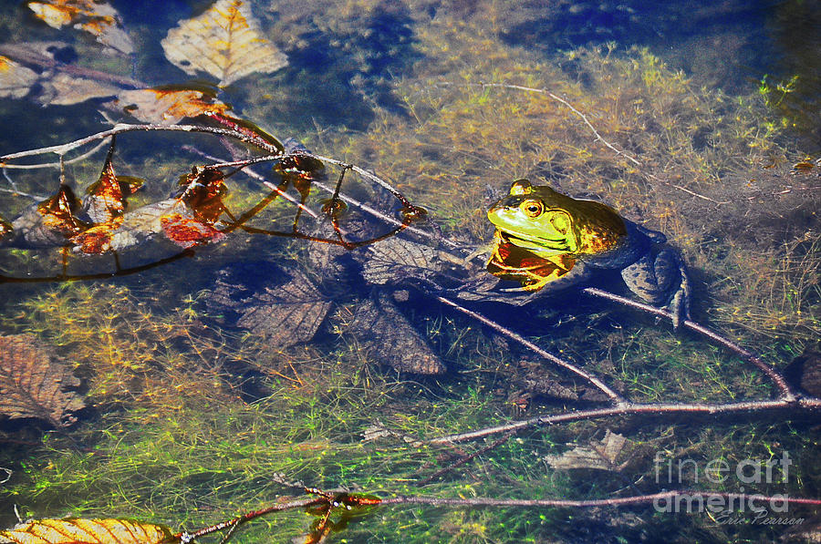 Frog in a Lake by Eric Pearson