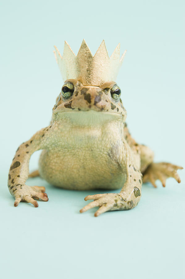 Frog Wearing Crown Photograph by Walter B. Mckenzie