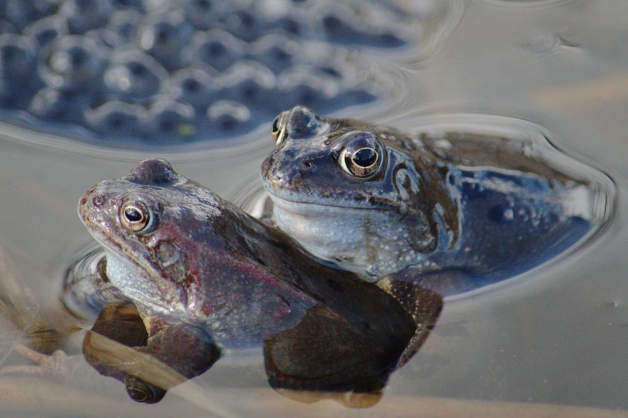 Frogs by Adrian Wale