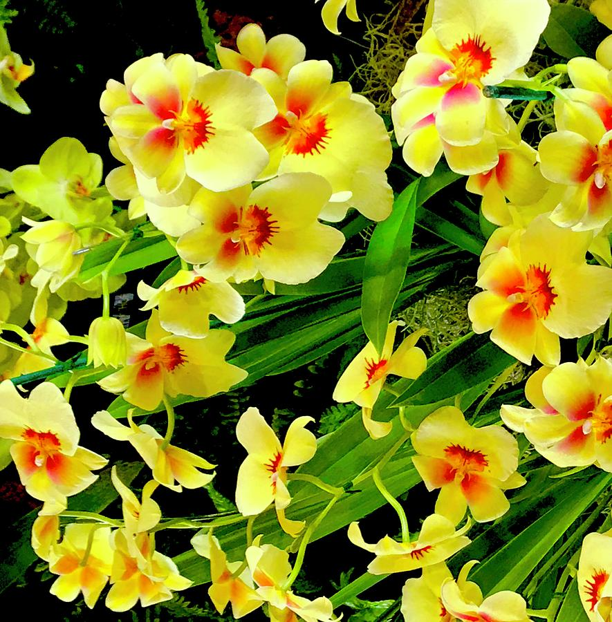 Frolicking Orchids in Yellow Aloha  by Joalene Young