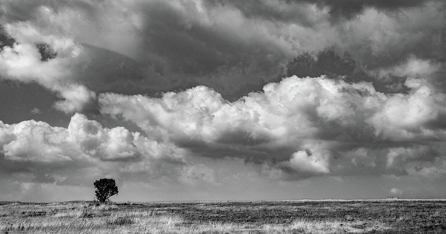 From the Bus Window in Africa by Marcy Wielfaert