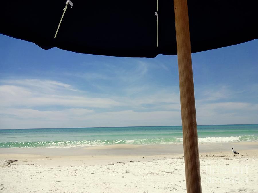 Beach Photograph - Front Row Seats by Megan Cohen