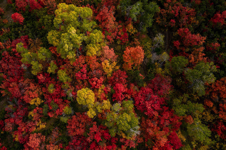 Fall Colors Photograph - Froot Loops by Dave Koch