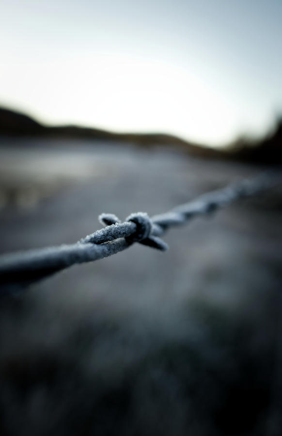 Frosted Barbed Wire by Kevin Schwalbe
