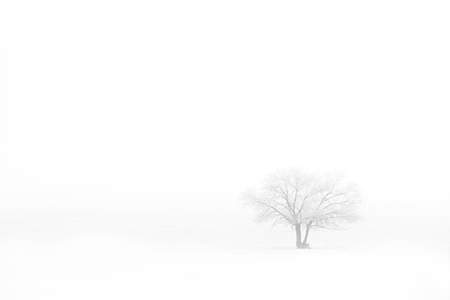 Winter Photograph - Frosted Tree by Darren White