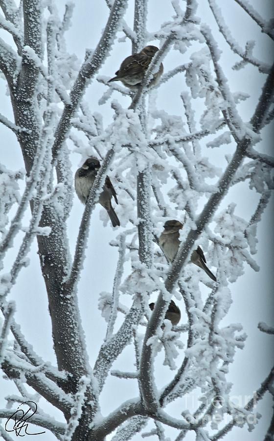 Frosty House Sparrows by Ann E Robson