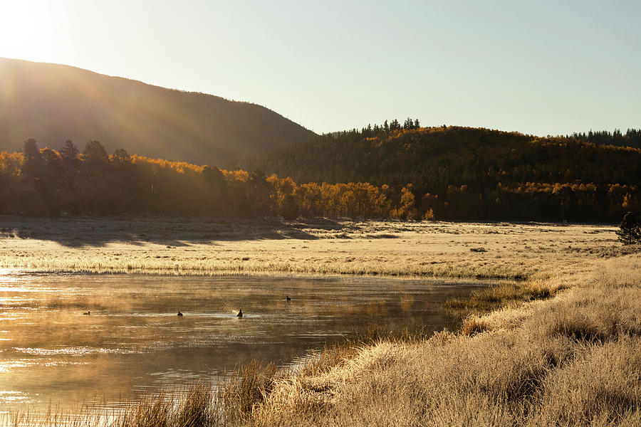 Frosty Morning for a Swim by Kevin Schwalbe