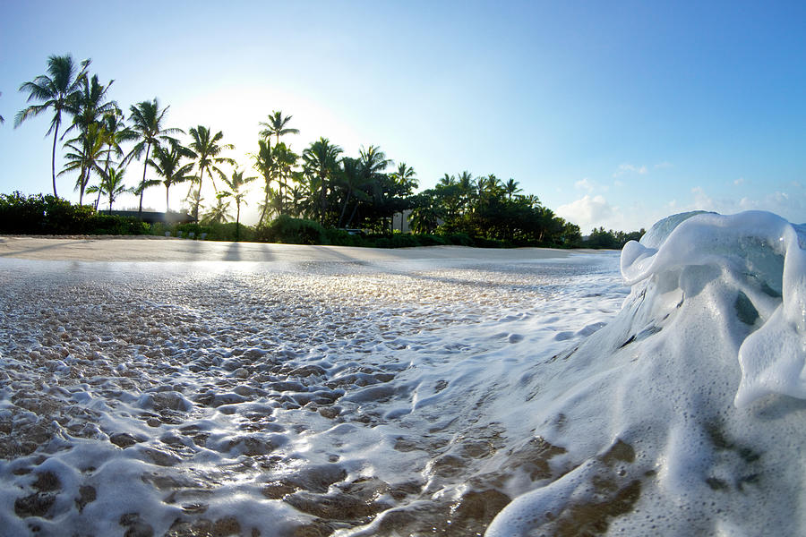Frothy Palms by Sean Davey