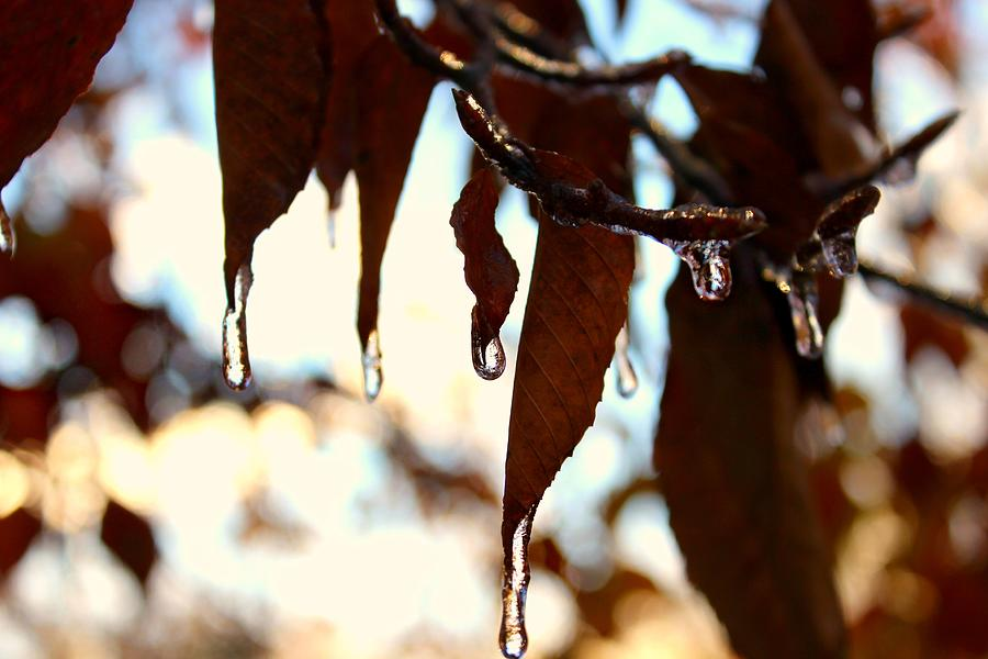 Autumn Photograph - Frozen Autumn  by Candice Trimble