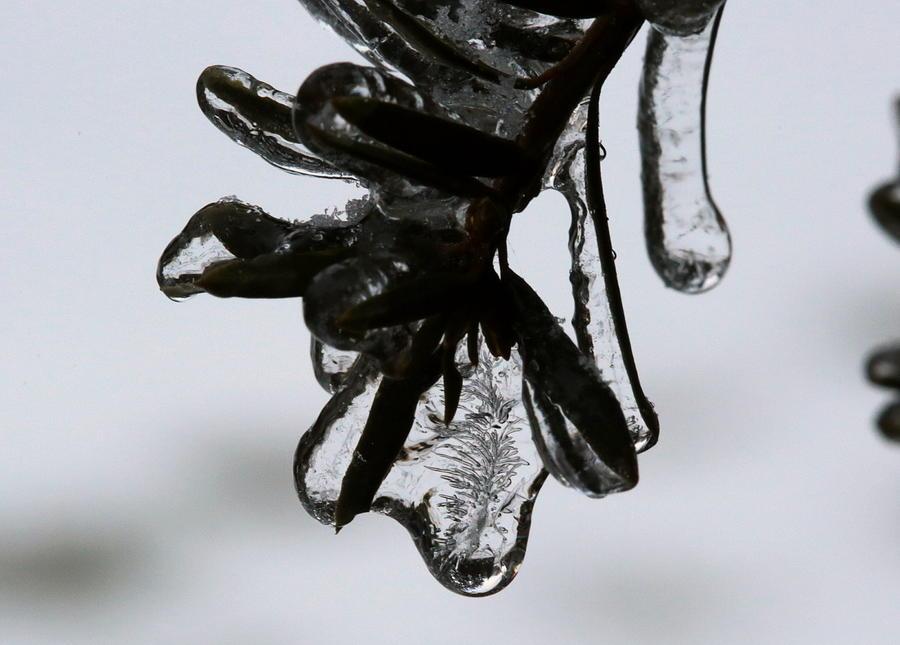 Frozen Beauty by Mark Salamon
