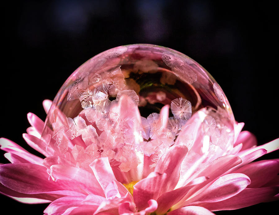 Frozen Bubble in a Flower by Brian Caldwell