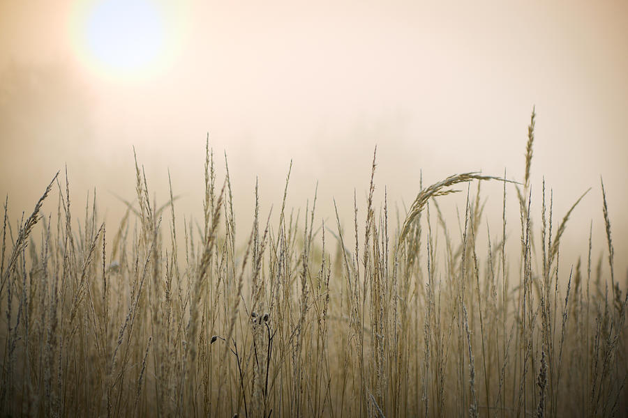 Frozen Grass At Hazy Morning Photograph by Alexkotlov