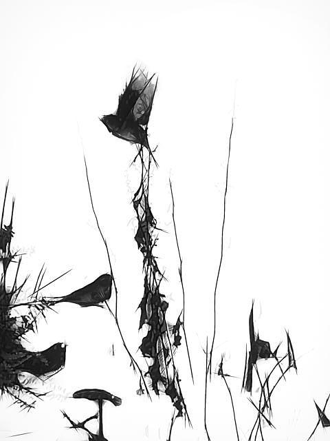 Frozen in Flight by Winnie Chrzanowski